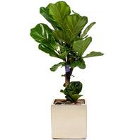 떡갈잎 소품